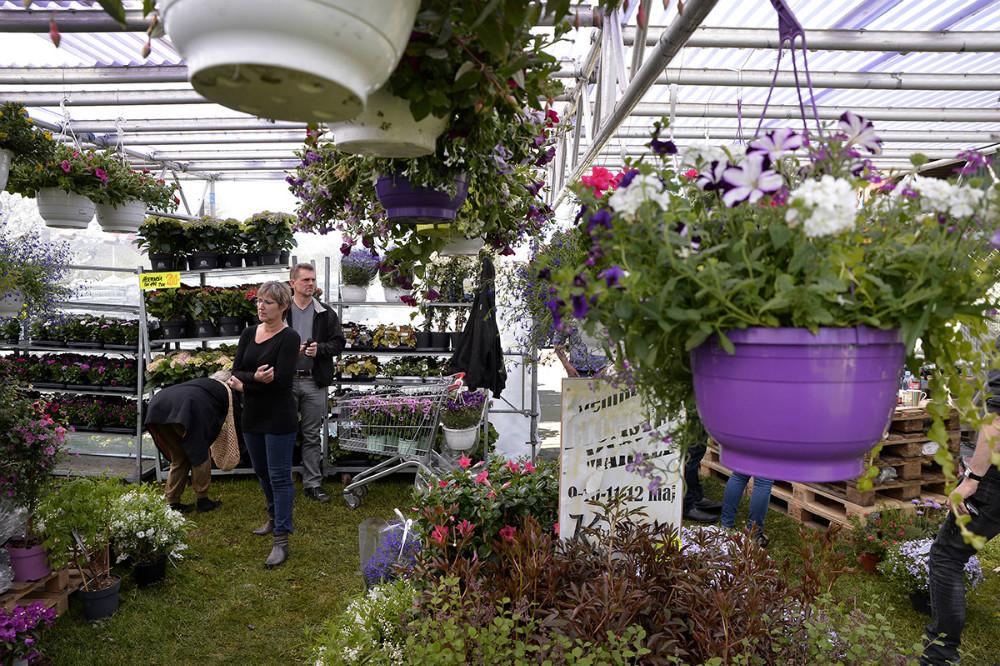 Stort plante- og blomstermarked hos Købmanden på Reersø. Foto Jens Nielsen