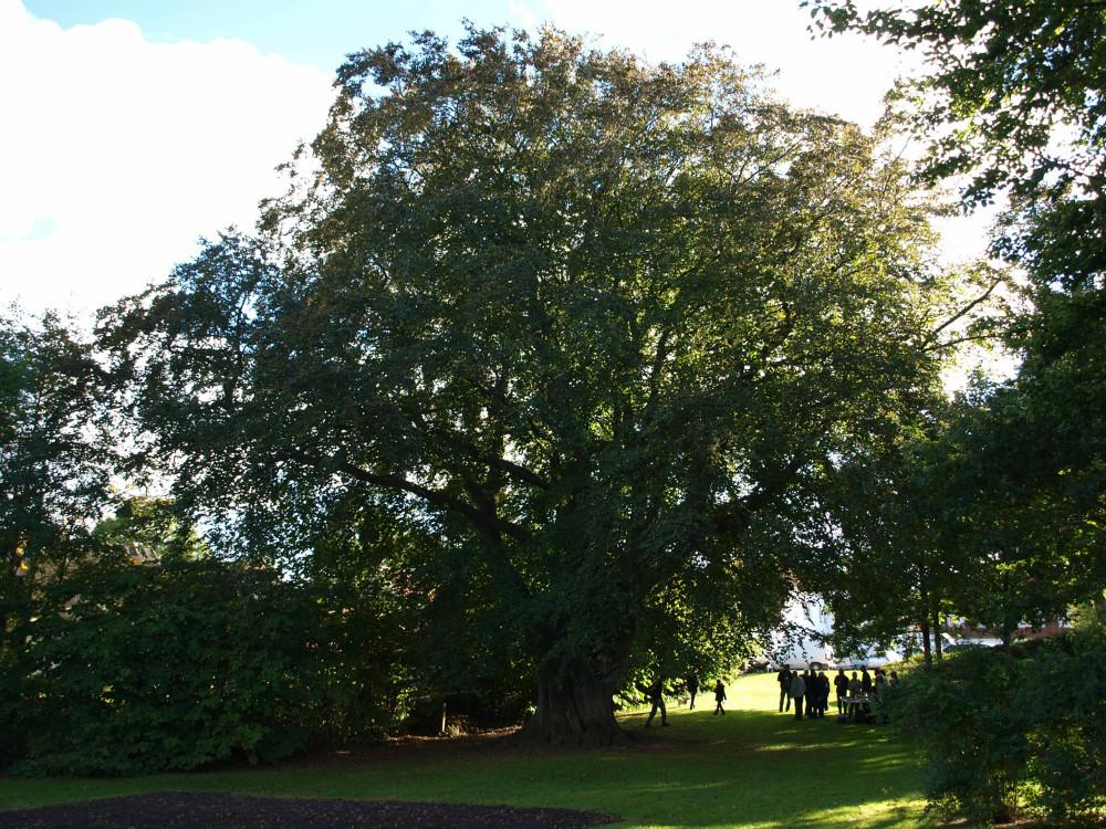 Evighedstræ nr. 4