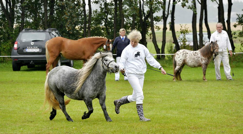 Heste- og Kræmmermarked i Gørlev.