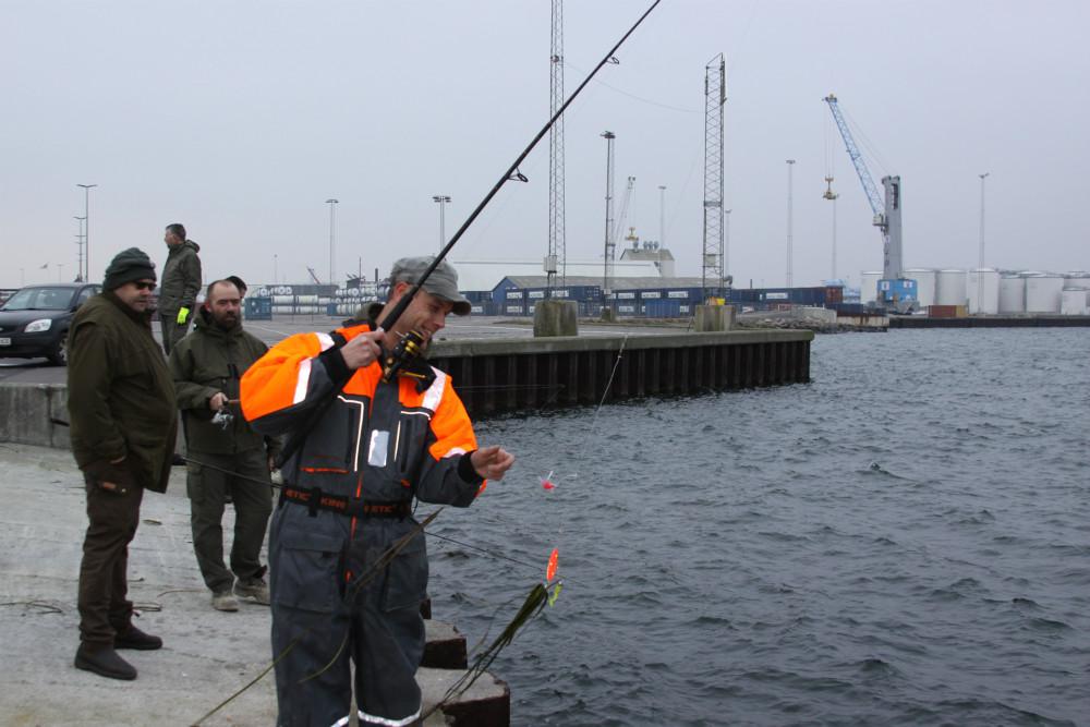 trækker torsk i land sushi kalundborg