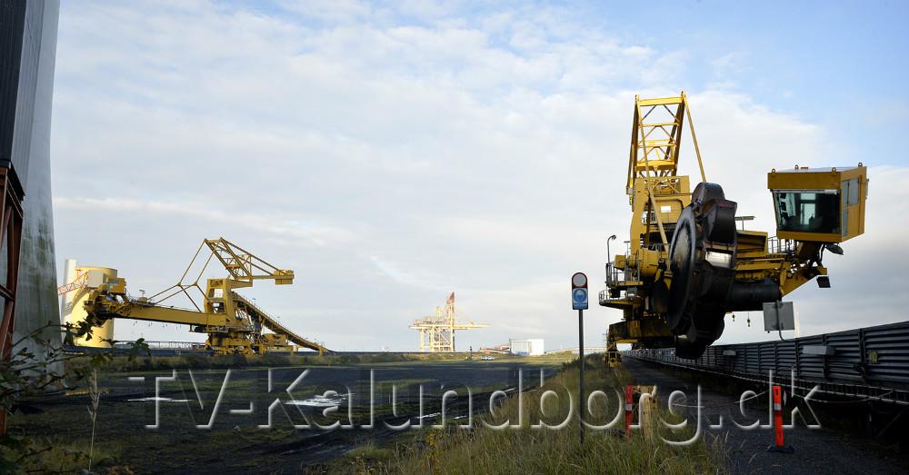 To såkaldte kul stakkere skal også skrottes. Foto: Jens Nielsen