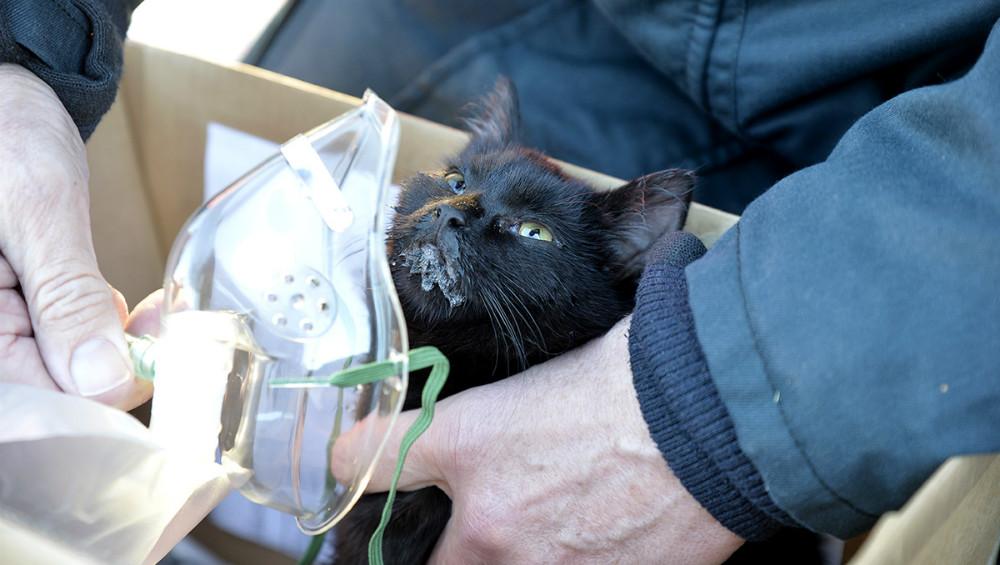 En kat blev reddet ud af det meget røgfyldte hus og fik ilt. Foto: Jens Nielsen