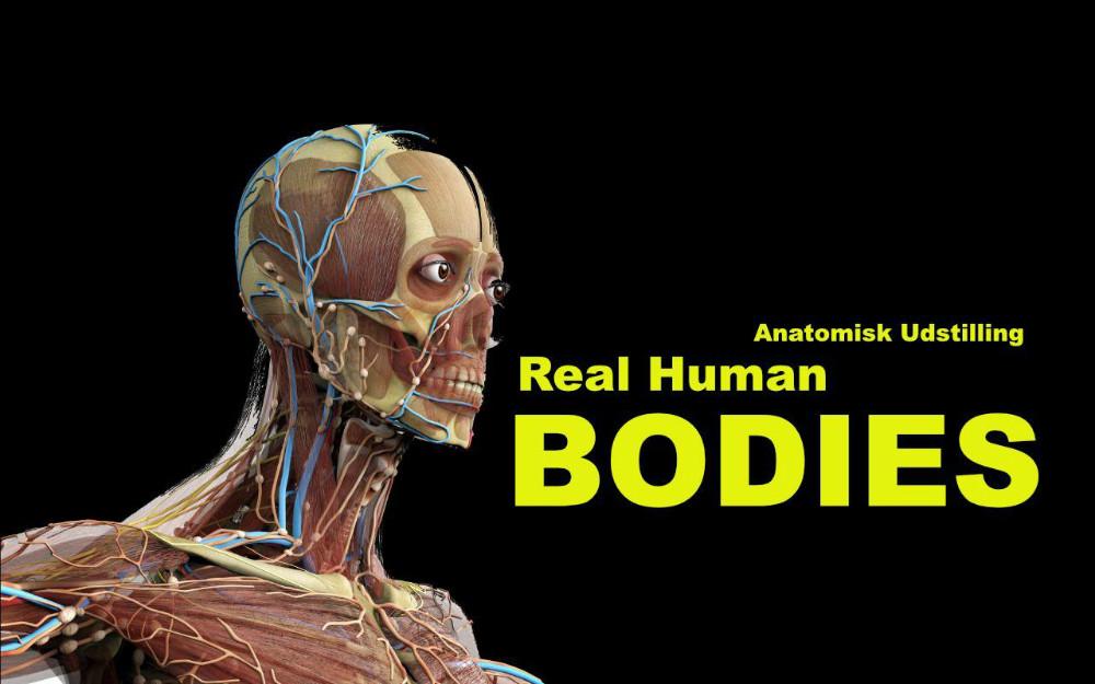 anatomisk udstilling kroppe