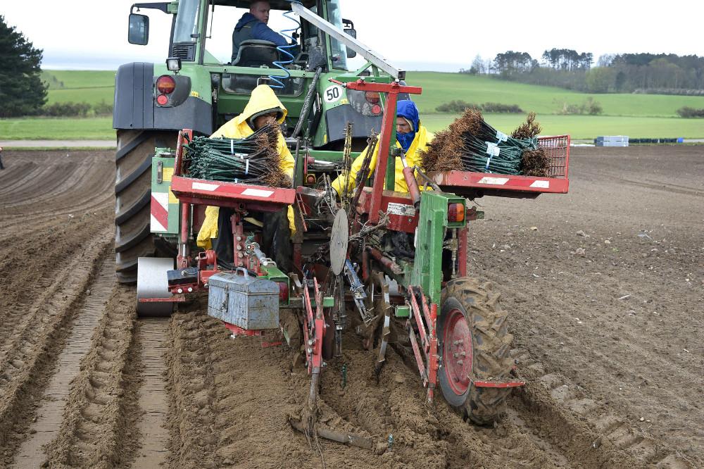 En specialmaskine fra Tyskland sætter de mange vinplanter ned i jorden. Foto Jens NIelsen
