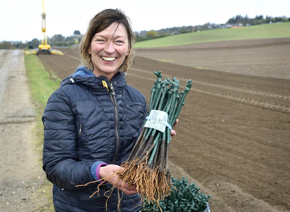 Lise  Barfod med vinplanter der skal i jorden på Røsnæs. Foto Jens Nielsen