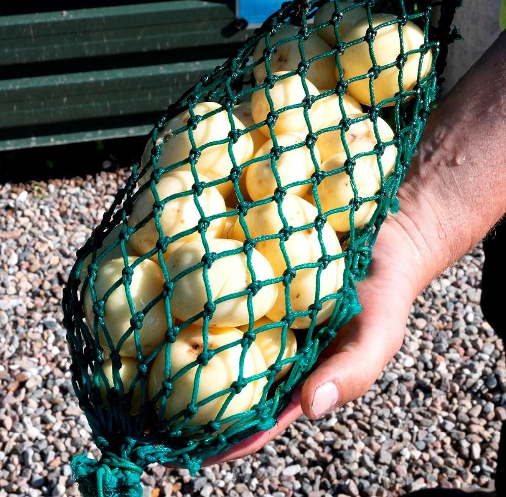 Nyopgravede kartofler fra egen mark. Foto: Jens Nielsen