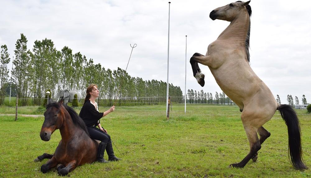 Charmaine Berdino fra Cirkus Arena, optræder med sit flotte hestedressur show.