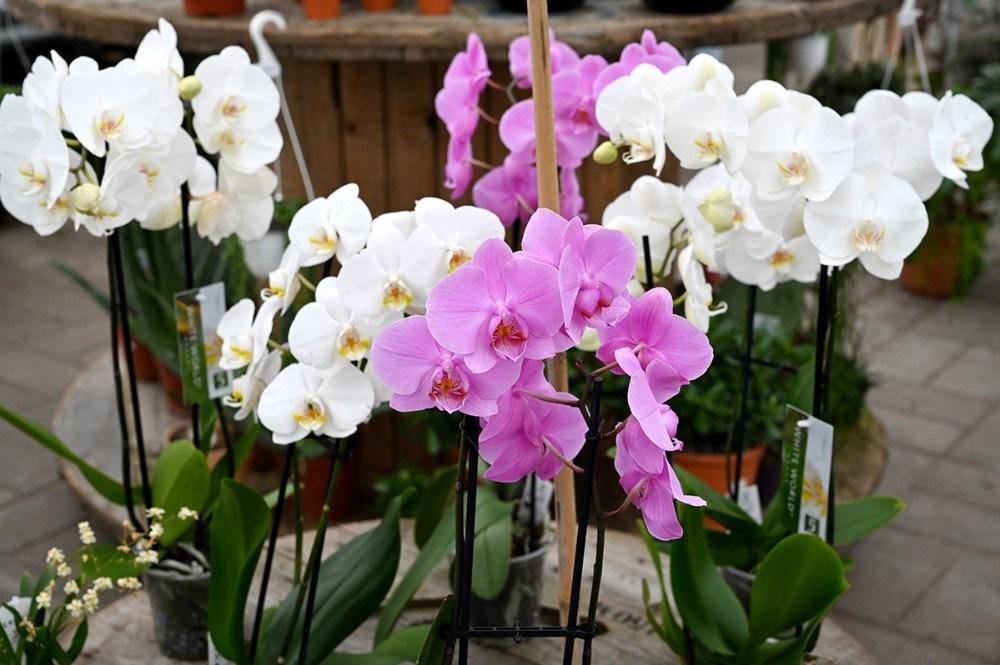 Orkideer er til halv pris. Foto: Jens Nielsen