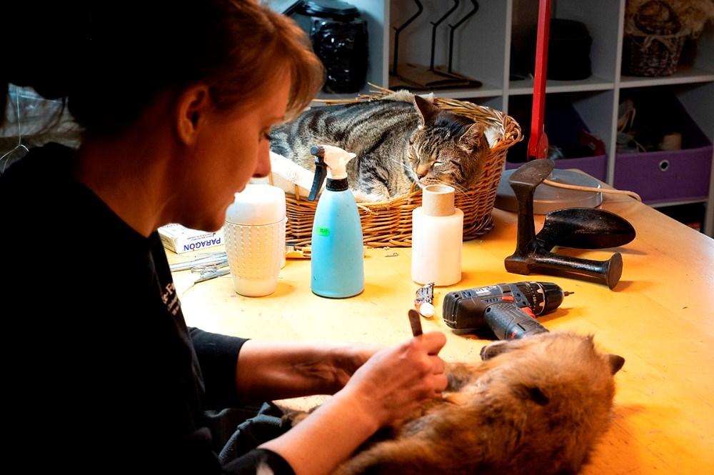 Katten Kita ligger i sin kurv på arbejdsbordet, og den er altså ikke udstoppet. Foto: Jens Nielsen