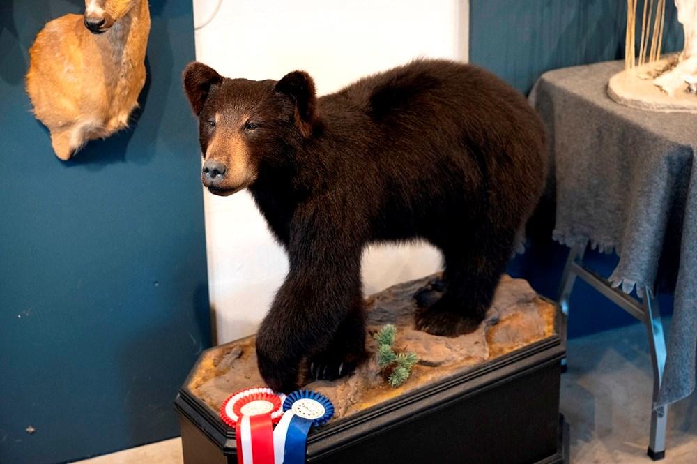 Den udstoppede bjørneunge har indbragt Susie en sølvmedalje ved Europamesterskabet. Foto: Jens Nielsen