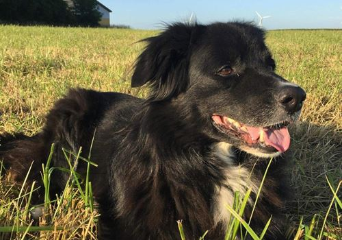 Eftersøgning i gang efter ældre hund