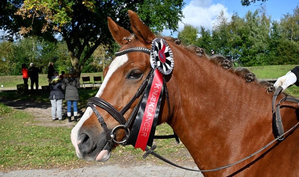 Alle ryttere fik en Knæk Cancer rosette til minde om dagen. Foto: Jens Nielsen
