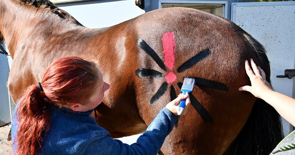 Flere ryttere gik all in, her er det Annika Alø Berthelsen fra Sorø som maler Knæk Cancer blomsten på sin hest. Foto: Jens Nielsen