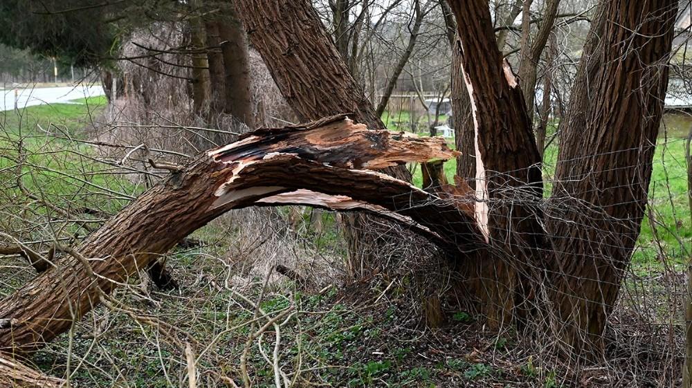 En stor gren fra et træ væltede i den kraftige vind, ud over Frederiksberg ved Svebølle. Foto: Jens Nielsen