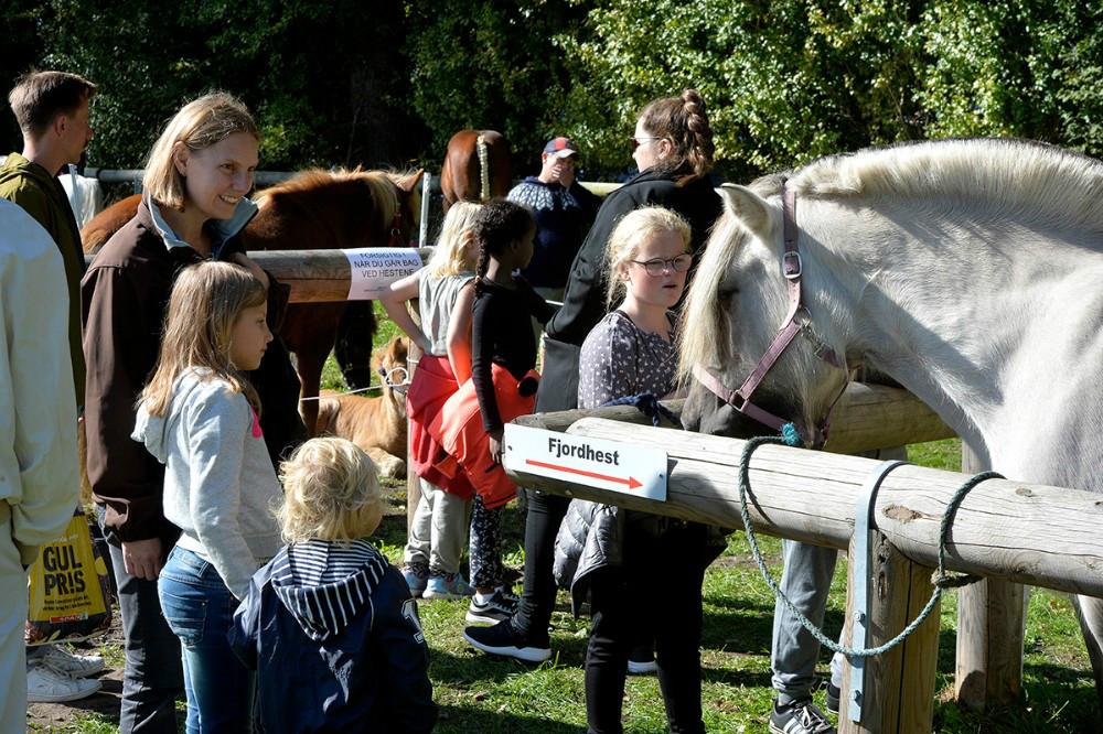 Der er Gørlev Hesteskue og Kræmmermarked i den kommende weekend. Arkivfoto Gitte Korsgaard.