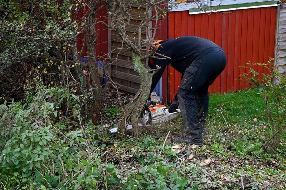 Der er ikke plads til det nye fortov, derfor må en række buske og træer fældes. Foto: Jens Nielsen