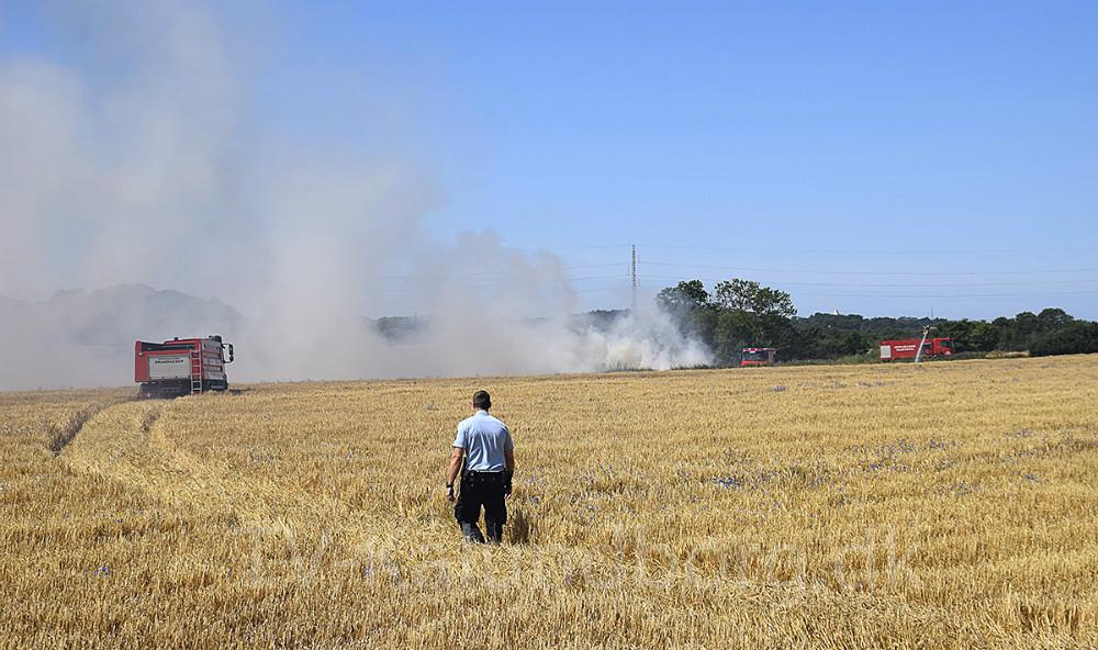 Brandvæsenet måtte køre henover over kornmark for at komme frem til branden. Foto: Gitte Korsgaard
