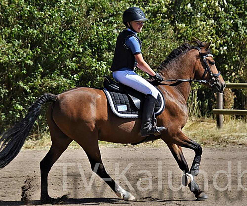 Sille Lundgaard skal sammen med sin pony, Miss Diva, til World Cup i Herning, hvor hun skal ride finalen i NordVestBox cup i Jyske Bank Boxen.