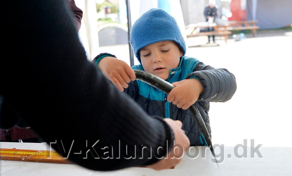 Vincent får målt og vejet sin mors hornfisk. Foto: Jens Nielsen