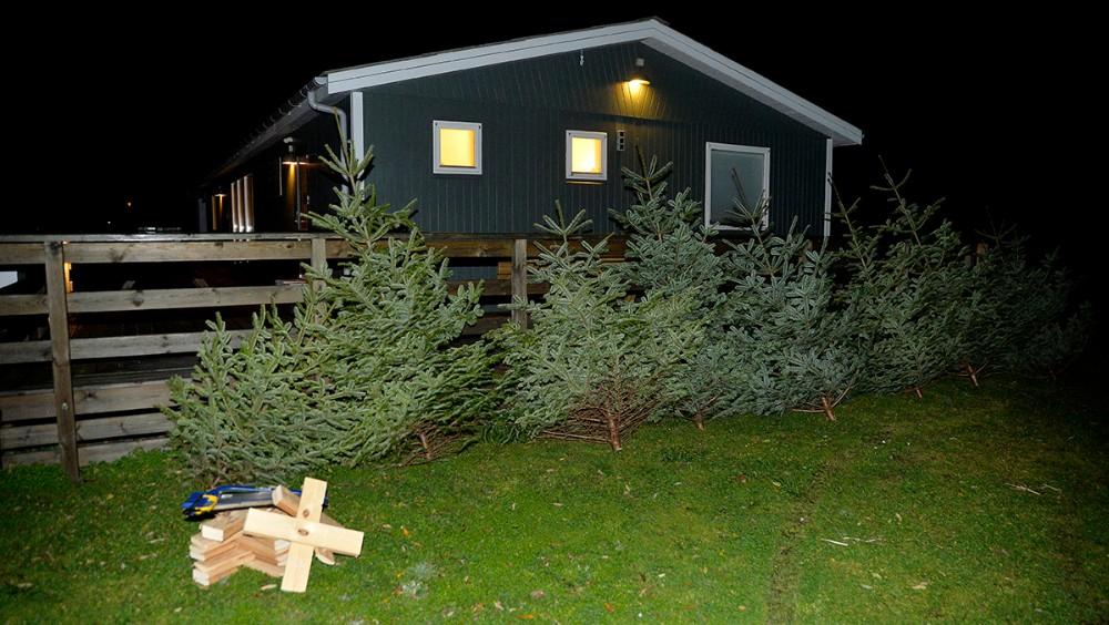 Der var et flot juletræ til alle familier. Foto: Jens Nielsen