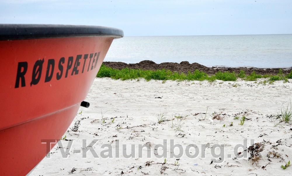 Der er rigtigt meget tang på Bjerge Sydstrand og Ornum Strand, som sommerhusejerne gerne vil have fjernet. Foto: Jens Nielsen