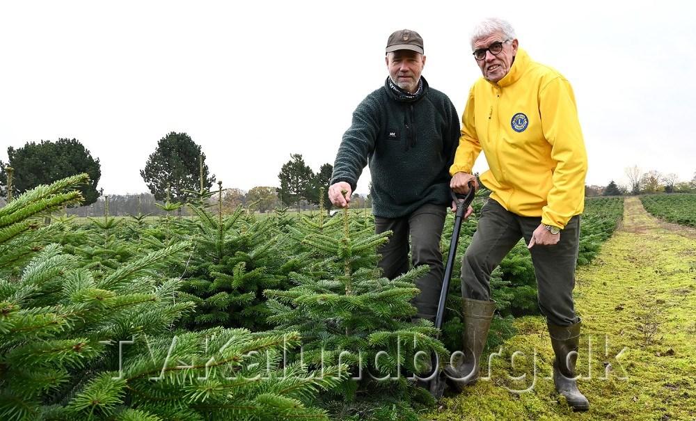 Skovfoged Thorkild Wisbech, Aggersvold Savværk sammen med Flemming Larsen, president Lions Kalundborg, igang med at grave et juletræ op. Foto: Jens Nielsen