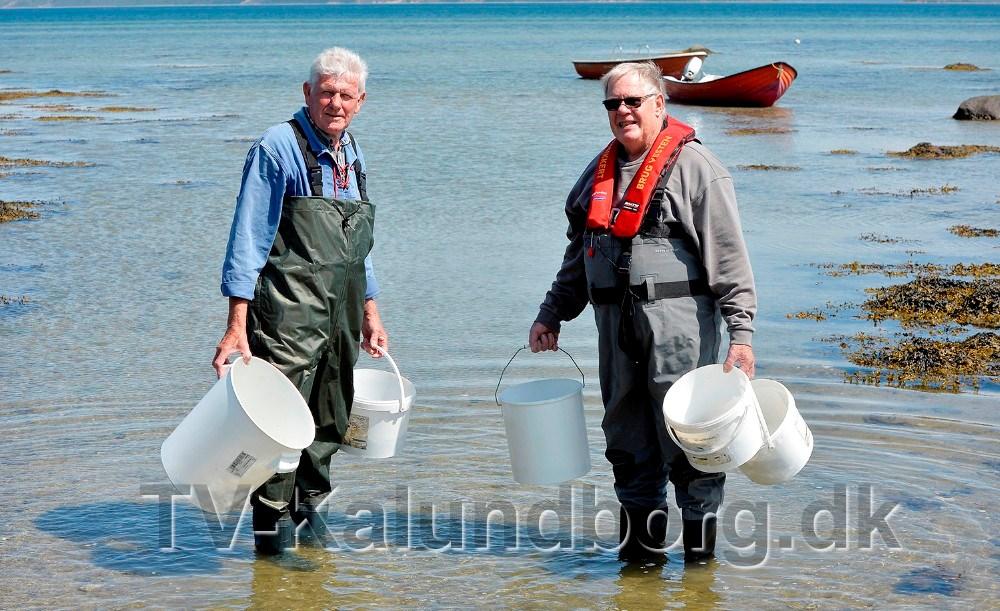 Formand for Alleshave Baadelaug, Jens Weinreich og bestyrelsesmedlem Leif Olsen sejlede de små ål omkring 500 meter ud i nekseløbugten. Foto: Jens Nielsen