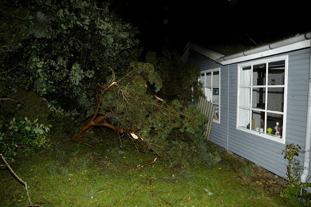Flere træer er væltet i forbindelse med at en skypumpe ramte Bjerge Sydstrand onsdag aften. Foto: Jens Nielsen