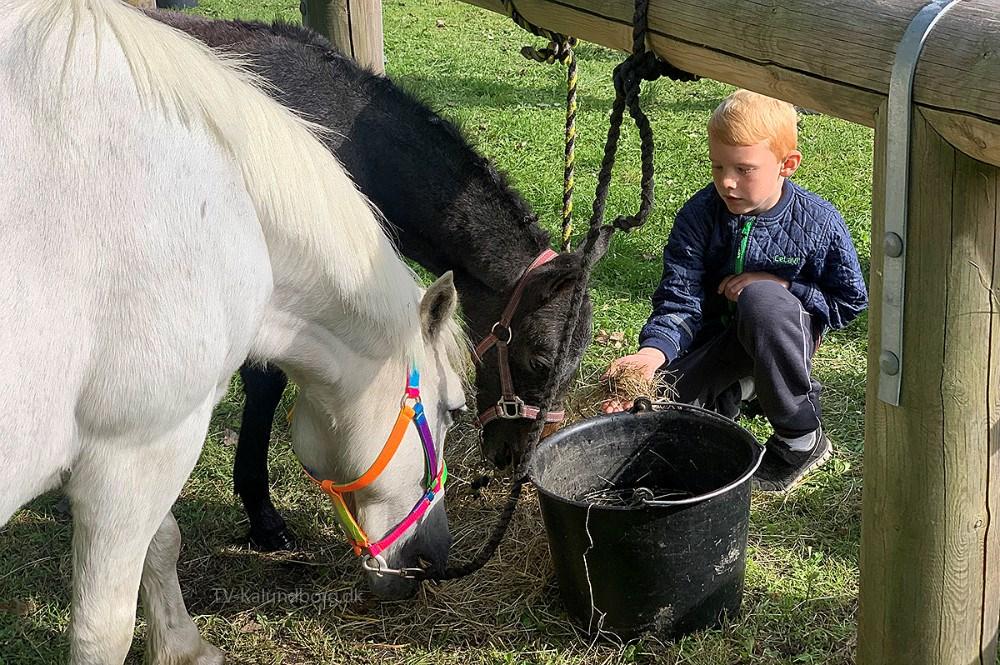 Hesteskue og Kræmmermarked i Gørlev hele weekenden. Foto: Gitte Korsgaard.