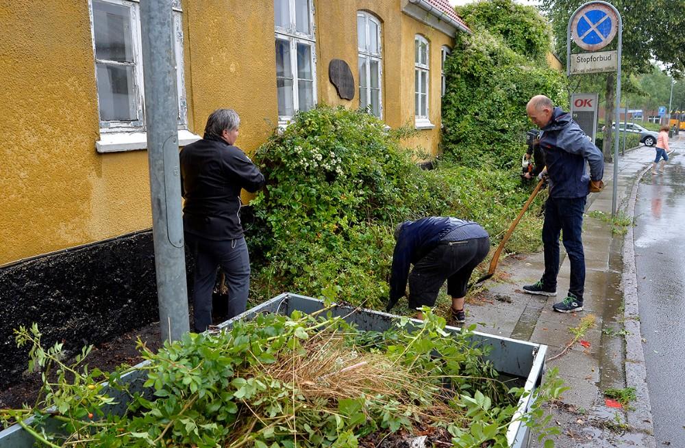 Borgmester Martin Damm mødte op i Gørlev torsdag eftermiddag for at rydde ukrudt. Foto: Jens NIelsen