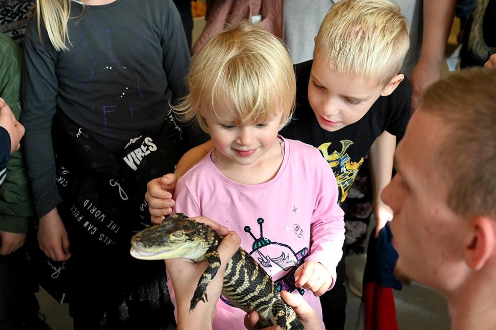 Den 9 måneder gamle alligator fik masser af opmærksomhed. Foto: Jens Nielsen