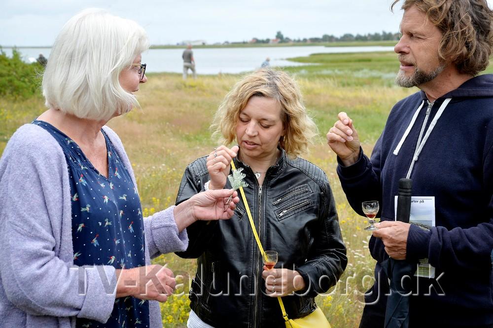 Jette Damlund fortæller om strandmalurt. Foto: Jens Nielsen