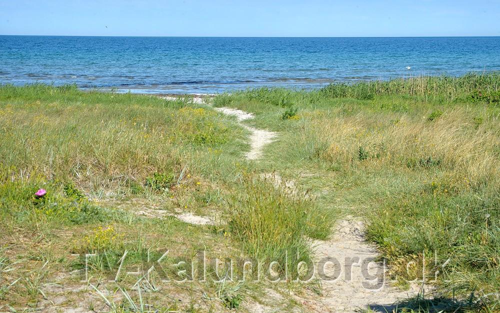 Kalundborg Kommune skal fraråde badning påBjerge Os Brovejen Strand. Foto: Jens Nielsen