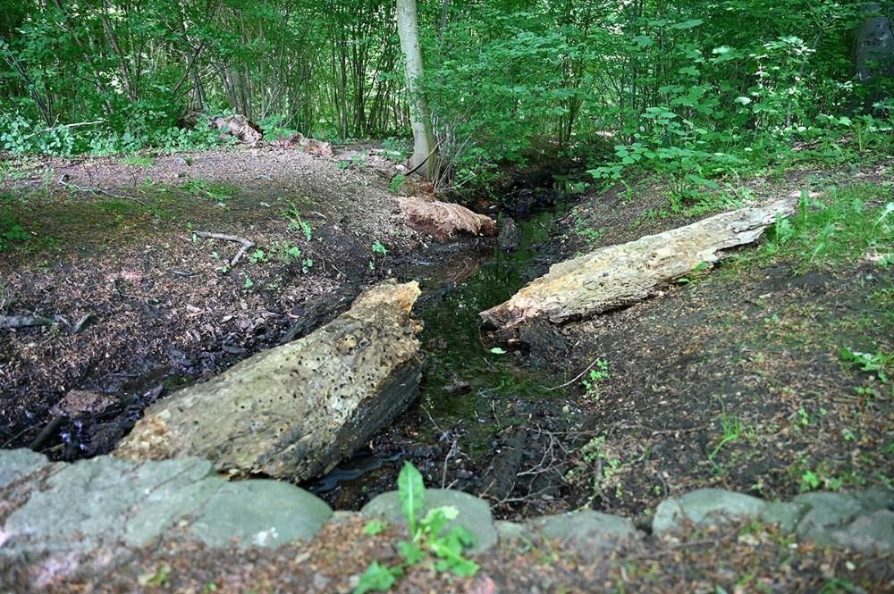 To vandløb risler af sted i den nordøstlige del af Kystskoven. Foto: Jens Nielsen