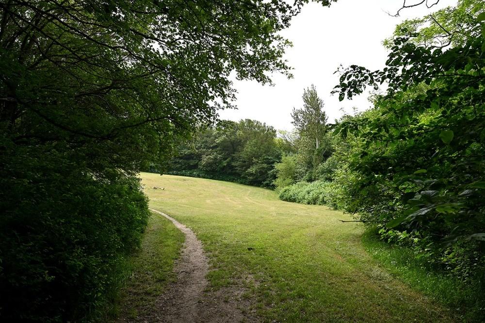 I Kystskoven findes flere store åbne, sydvendte græsplæner, der indbyder til at slå sig ned med madkurven. Foto: Jens Nielsen