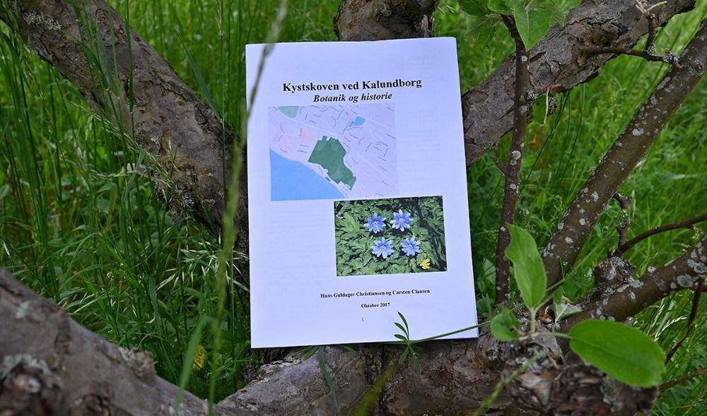Blå anemone? Jo, men i Kystskoven vokser den blegblå anemone, der kan overleve i solrige og nedbørsfattige egne som Røsnæs. De blegblå anemoner er forsidebilledet på rapporten om Kystskoven ved Kalundborg. Foto: Jens Nielsen