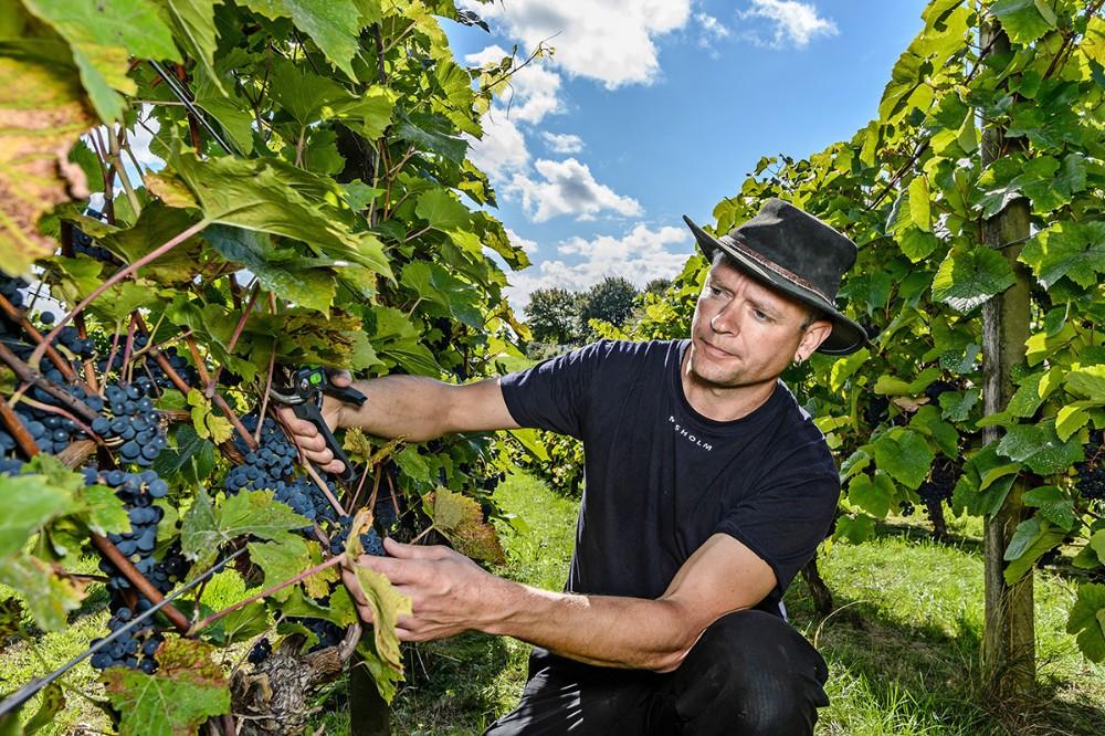 Vinbonde Anders Lejbach. Foto: Ole Agerbæk