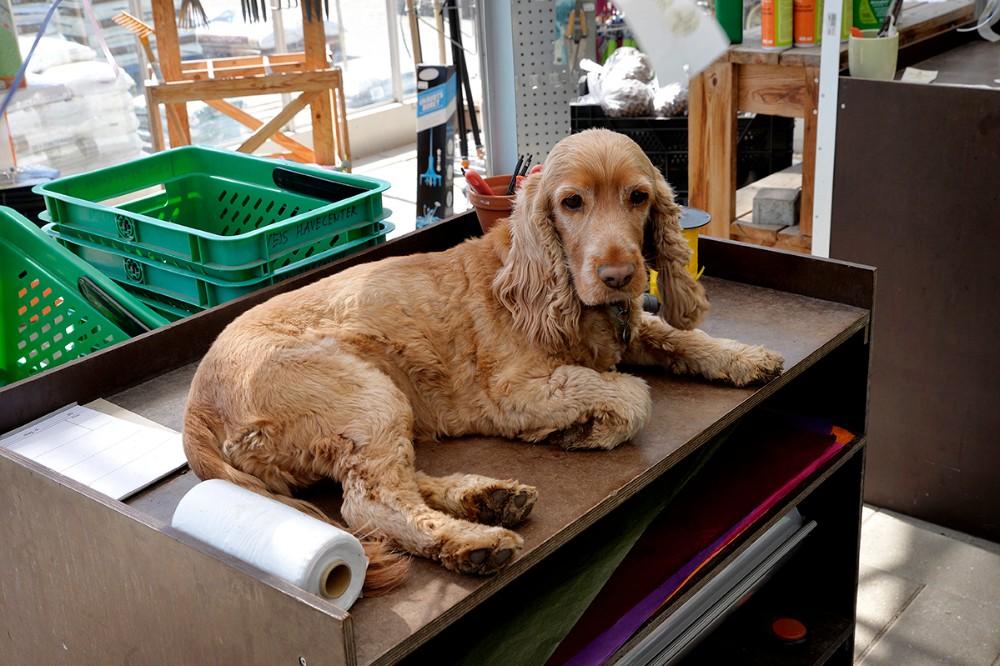 Den populære hund Kikki. Foto: Jens Nielsen