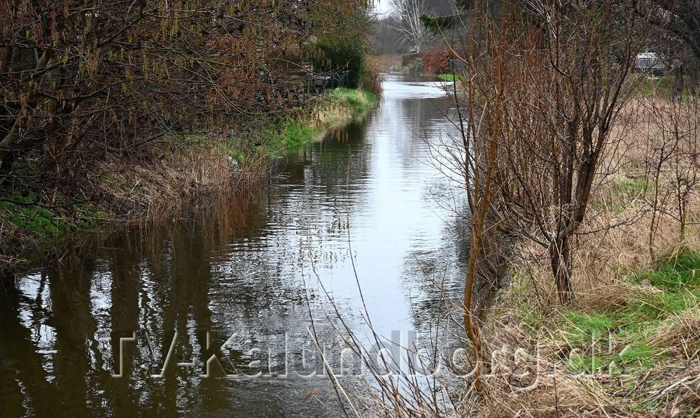 Åen er gået over side bredder i området bag Lyngparken. Foto: Jens Nielsen