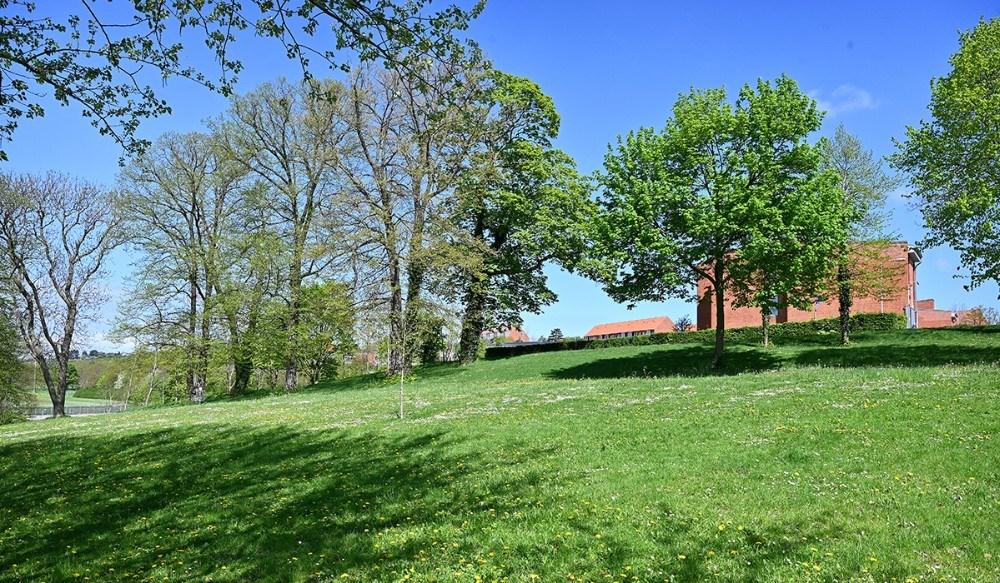 De otte klyngehuse skal placeres i den øverste del af Klosterparken. Foto: Jens Nielsen