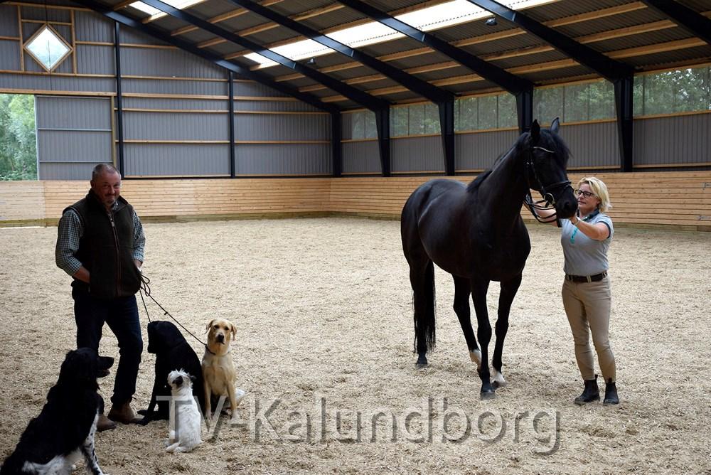 Malene Folmer Jensen med en af sineheste og Jacob Gulmann med to af sine hunde i den nye ridestald.Foto: Gitte Korsgaard