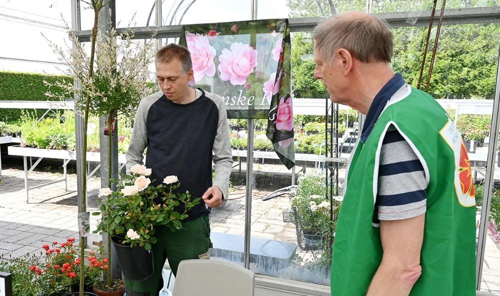 Kristian Olsen, indehaver af Vejs Havecenter i Høng, med en rose i hånden. Foto: Jens Nielsen