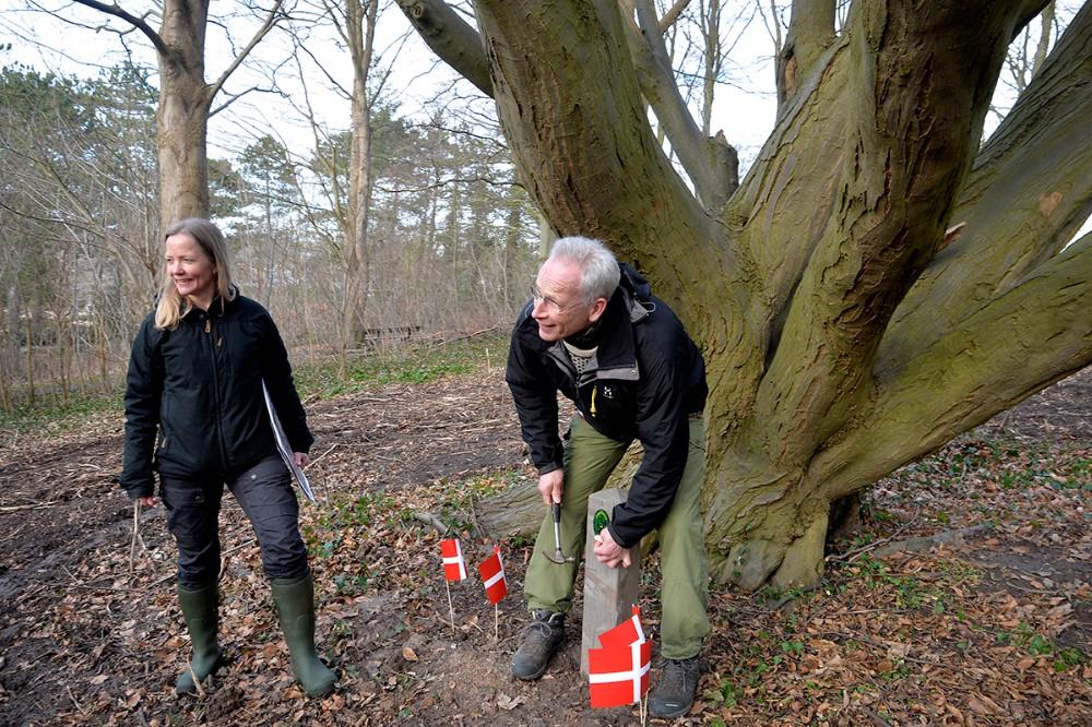 Skov- og landskabsingeniør Rasmus Berg, Kalundborg Kommune satte det flotte skilt på mens Charlotte Jørgensen fra Vej og Park kikkede på. Foto: Jens Nielsen