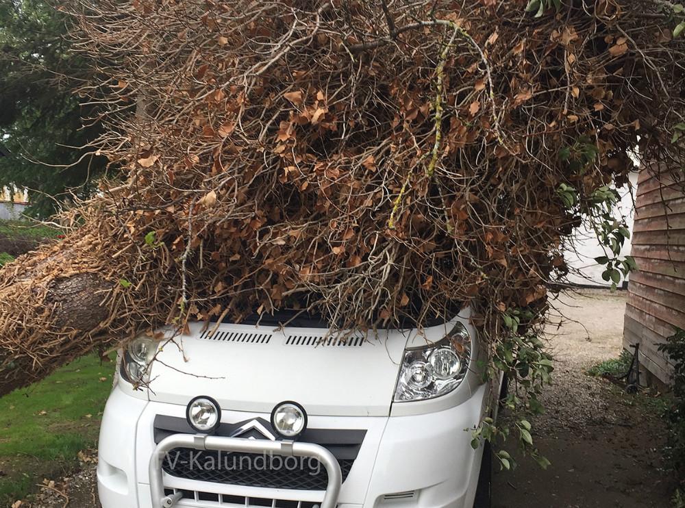 Et pæretræ endte på bilen i indkørslen. Privatfoto.