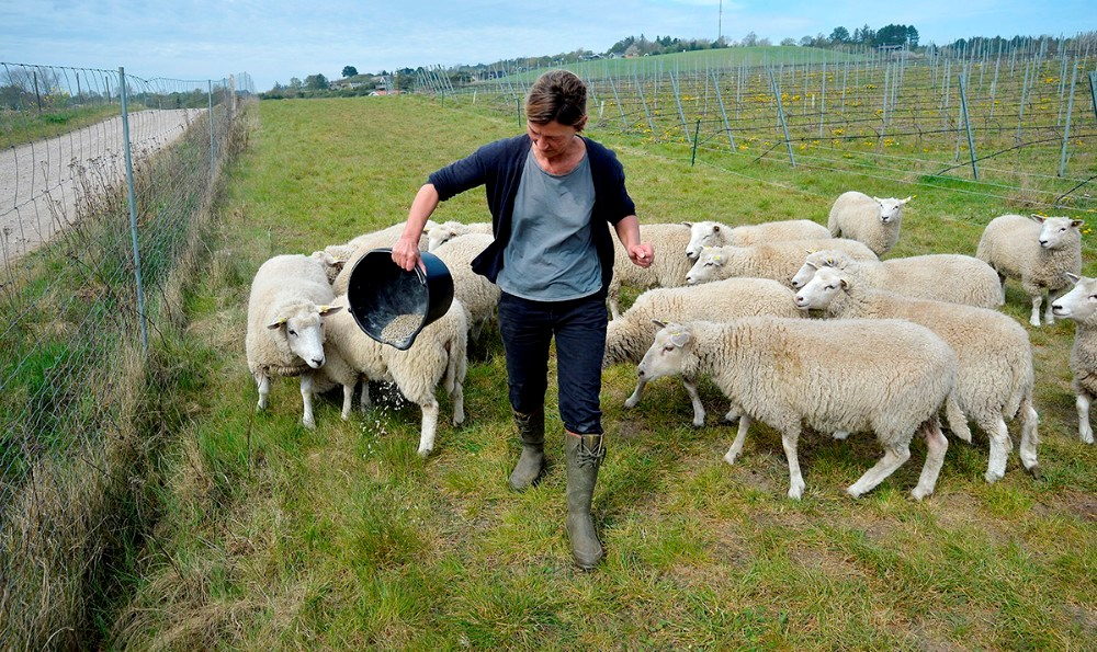 Lise Barfod, og de mange nye ´vinmarksmedarbejdere´. Foto: Jens Nielsen