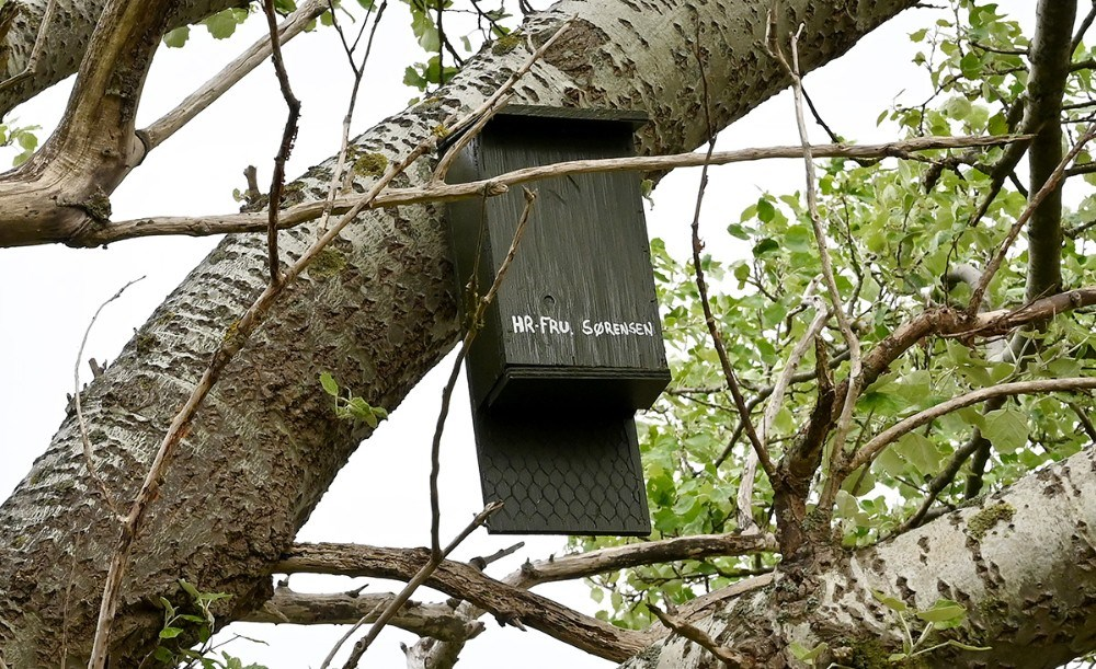 Fuglekasse til flagermus. Foto: Jens Nielsen