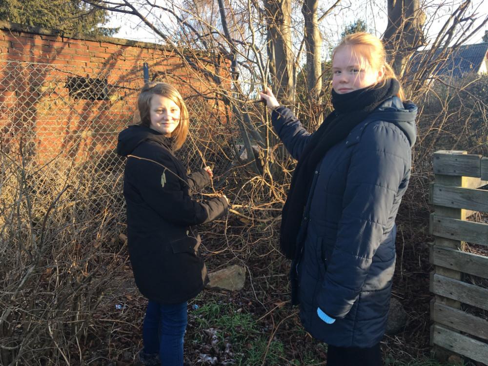 Clara Ulrikkenborg Andersen og Cisse Trøstrup Darre' fra 6.kl. erude for at lede efter bakterier i området omkringTømmerup Skole.