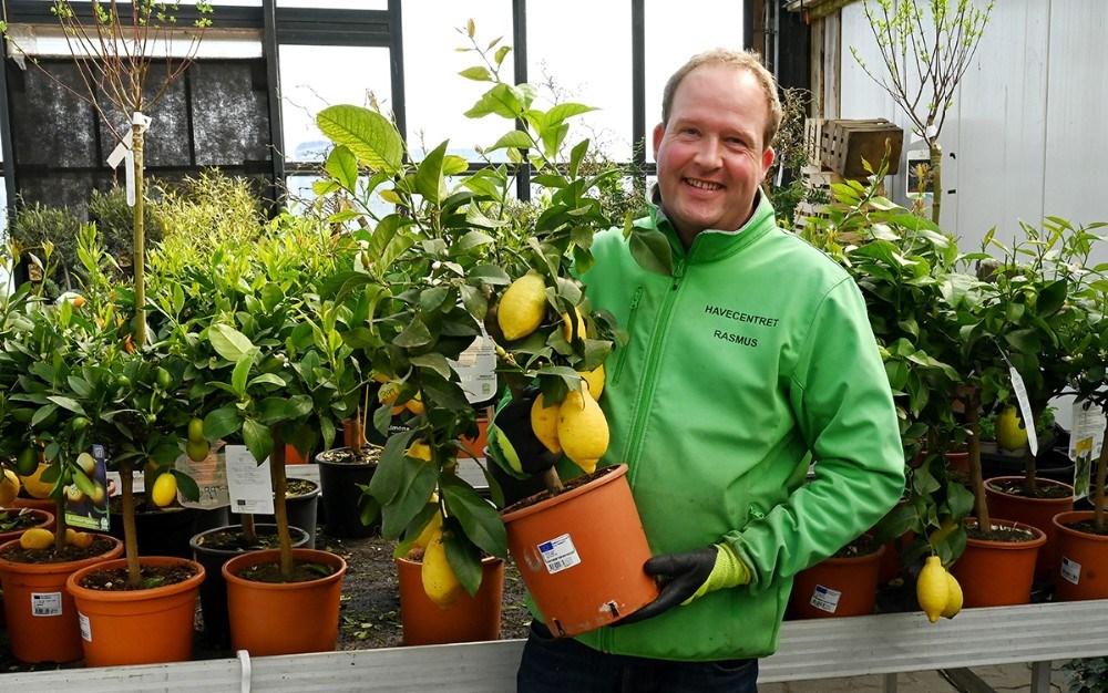 Rasmus Jensen med et citrustræ. Foto: Jens Nielsen